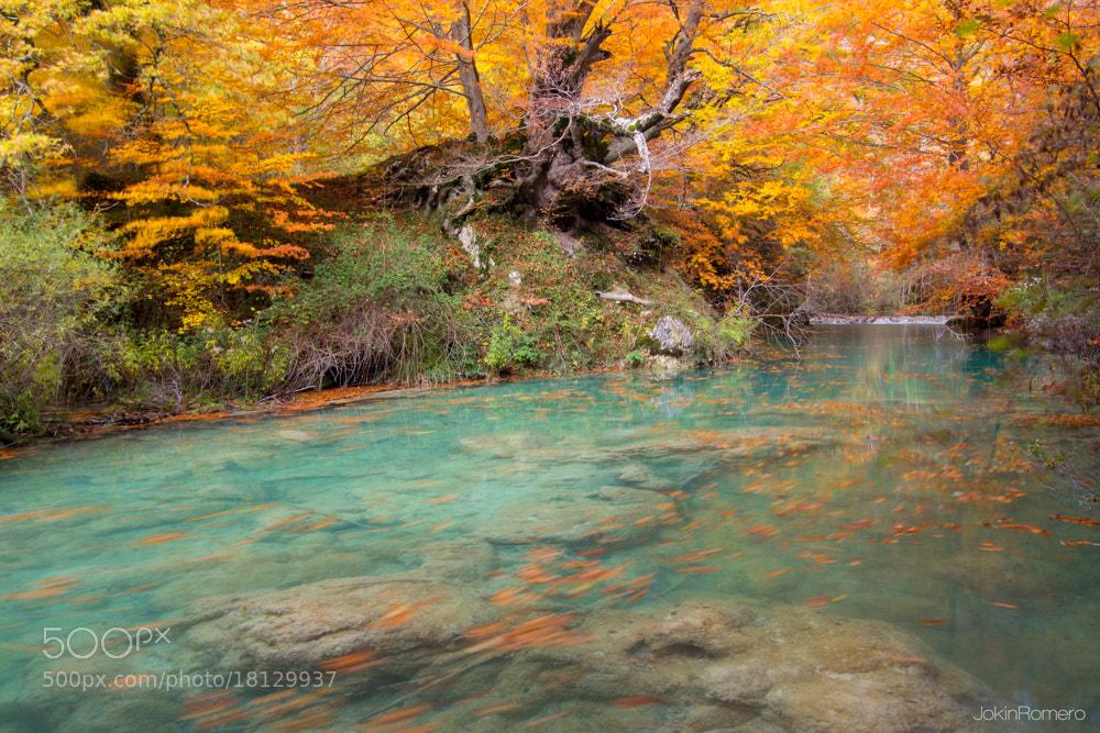 Photograph Fairy tale river by Jokin Romero on 500px