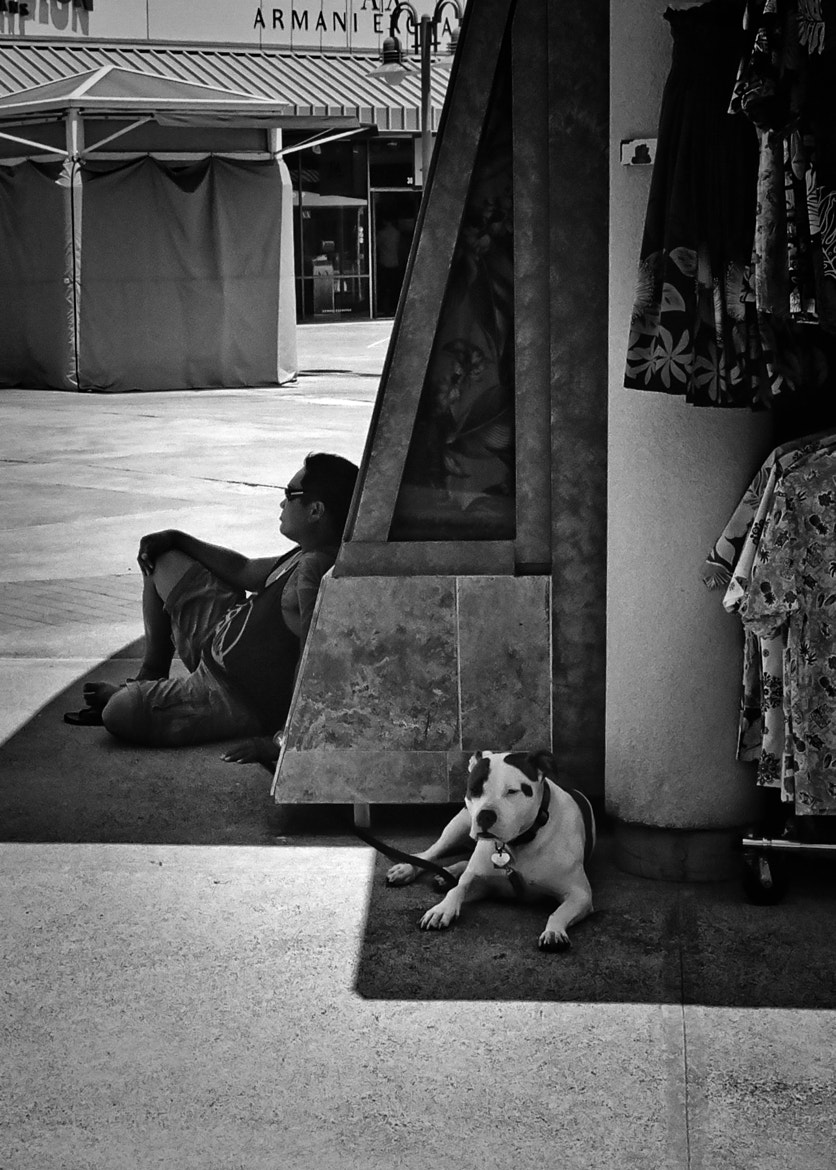 Photograph Doggy Shade by Virgil Gabriel on 500px