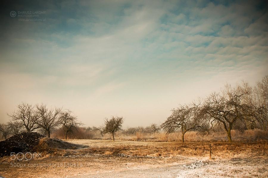 Photograph Winter garden by Dariusz Łakomy on 500px