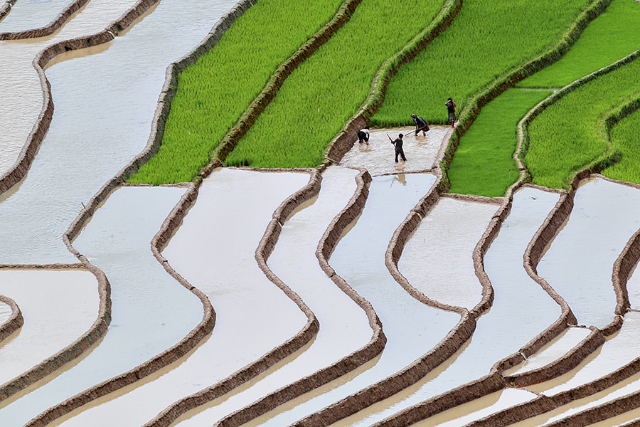 Photograph Prepare for a new rice season by Hai Thinh on 500px