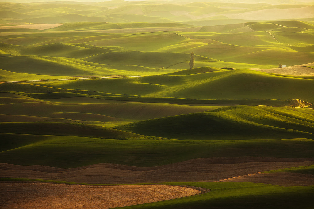 Photograph Palouse Dreaming by David Thompson on 500px
