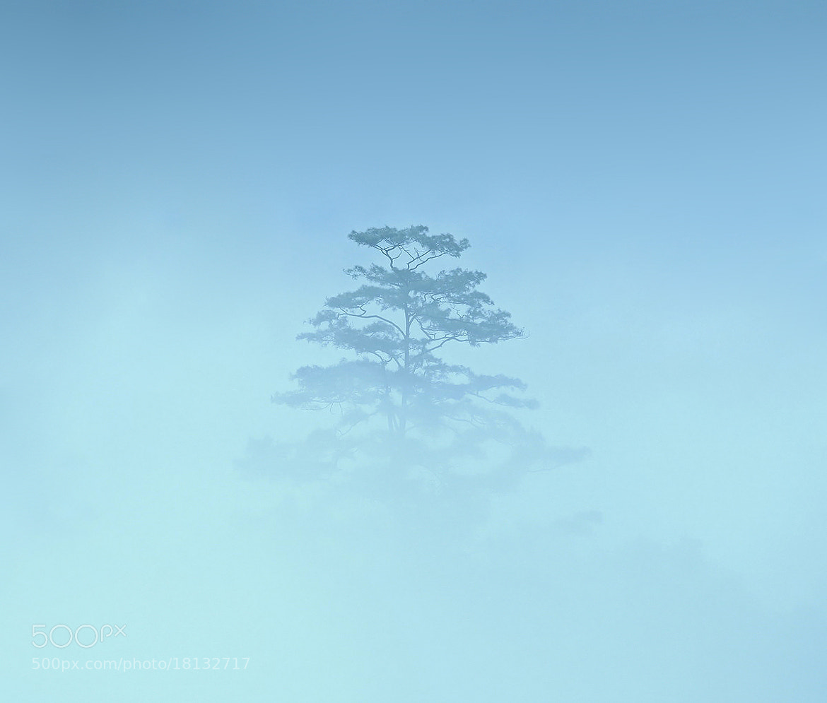 Photograph Misty Blue  by Guy HIGHLANDER on 500px