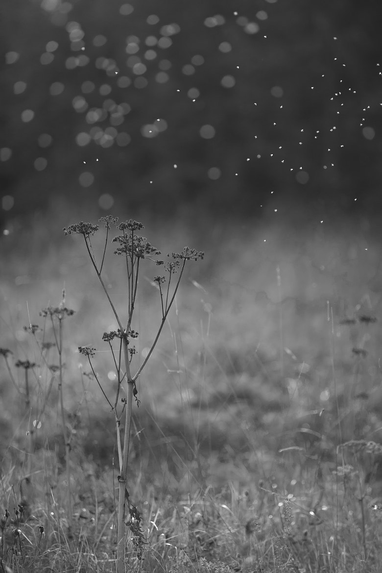 Photograph Fairy Dust by Marika Järvinen on 500px