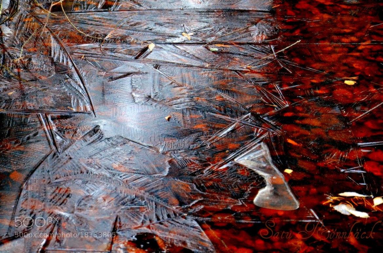 Photograph Ice Crust on the Swamp Lake by Satu Rönnbäck on 500px