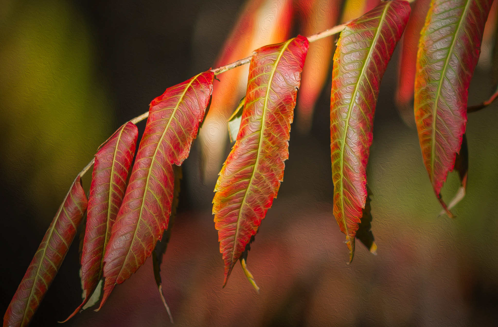 Photograph As the leaves turned red... by J-O Eriksson on 500px