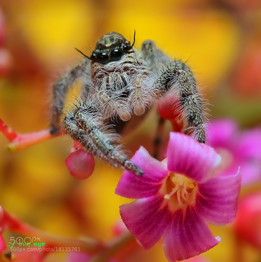 Photograph \\oOOo// by bug eye :) on 500px