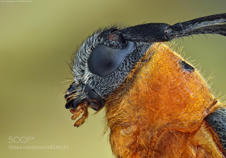 Photograph Dłużynka dwukropkowa. by ireneusz irass walędzik on 500px