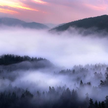Haferfels Nebelwald