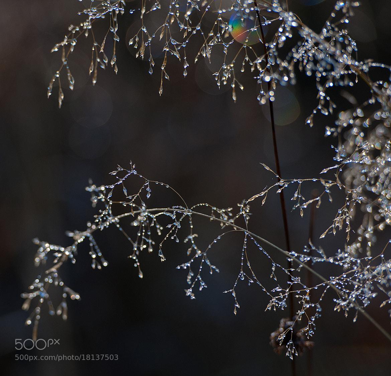 Photograph Swarovski Crystal Water by Genovia Tina Obreja on 500px