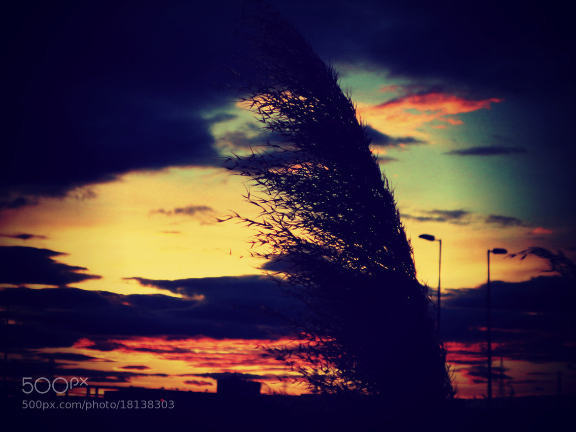 Photograph Sunset, city and plant. by Sergio Nuñez on 500px