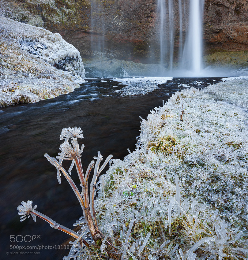 Photograph Frozen Beauty by Rainer Mirau on 500px