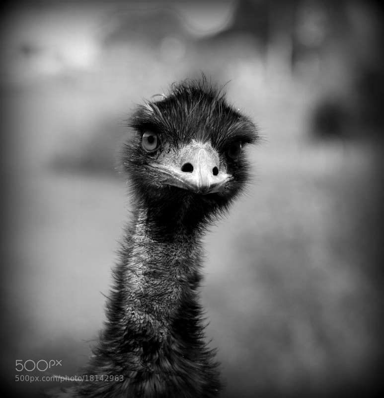 Photograph Un problème? by Sonia Preuss Gambier on 500px