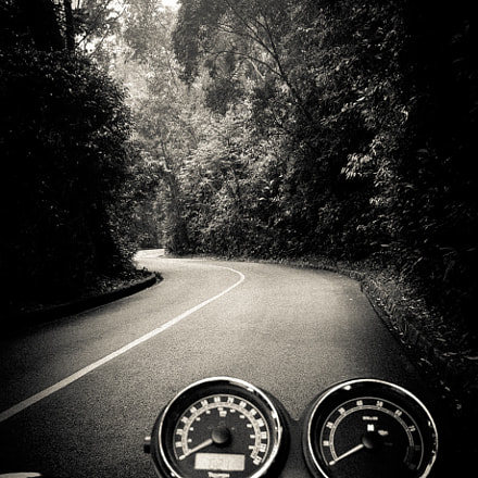 Rain Forest Ride
