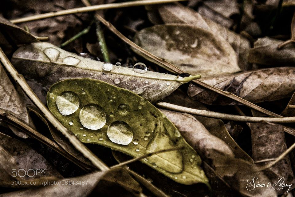 Photograph Drops by Sinan Atasoy on 500px