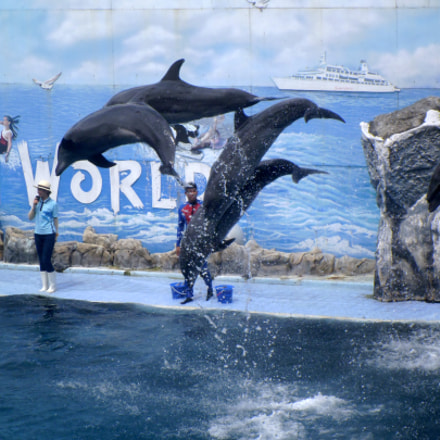 Safari World Dolphins Show, Panasonic DMC-LS5