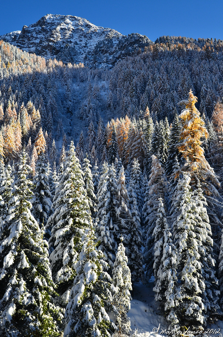 Photograph First snow over the trees by Marco Vanzo on 500px