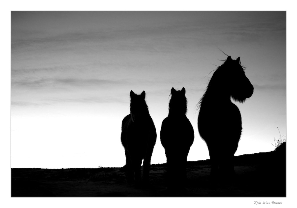 Photograph Horses by Kjell Stian Brunes on 500px