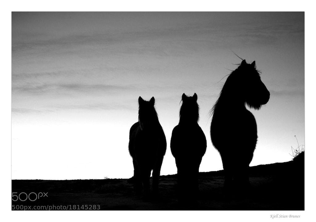 Photograph Horses by Kjell Stian Brunes on 500px