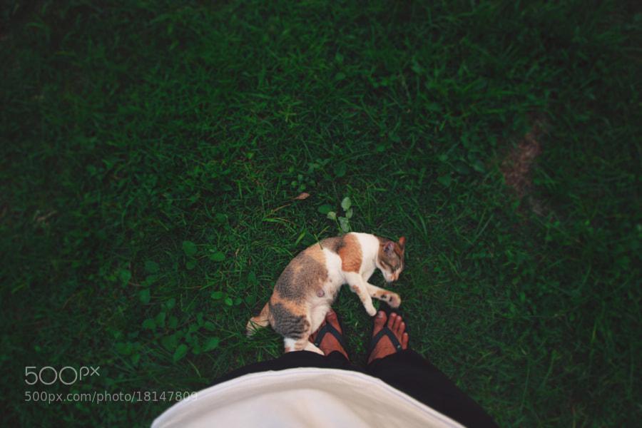 loving Cat by Nazrin Shah (NazrinShah)) on 500px.com