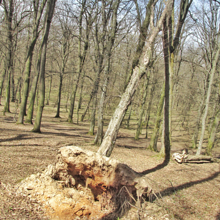 Tree uprooted, Canon POWERSHOT SX160 IS