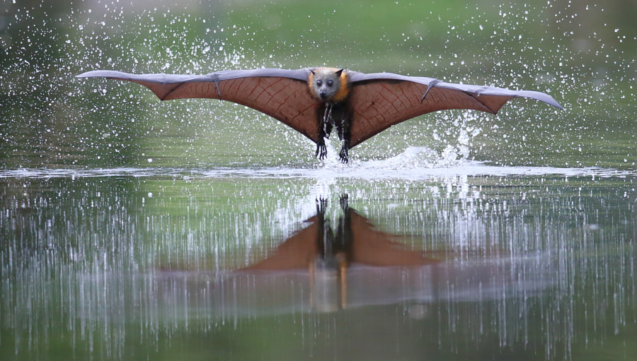 Another One Coming Straight At Me by Michael Cleary on 500px.com