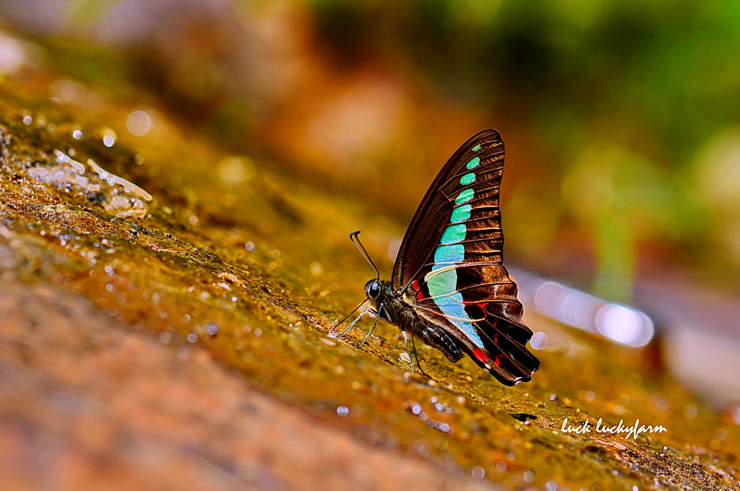 Photograph  Common Bluebottle  by Luck Luckyfarm on 500px