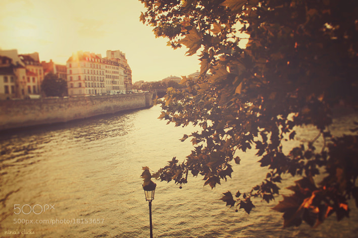Photograph Golden afternoon by Nina's clicks on 500px