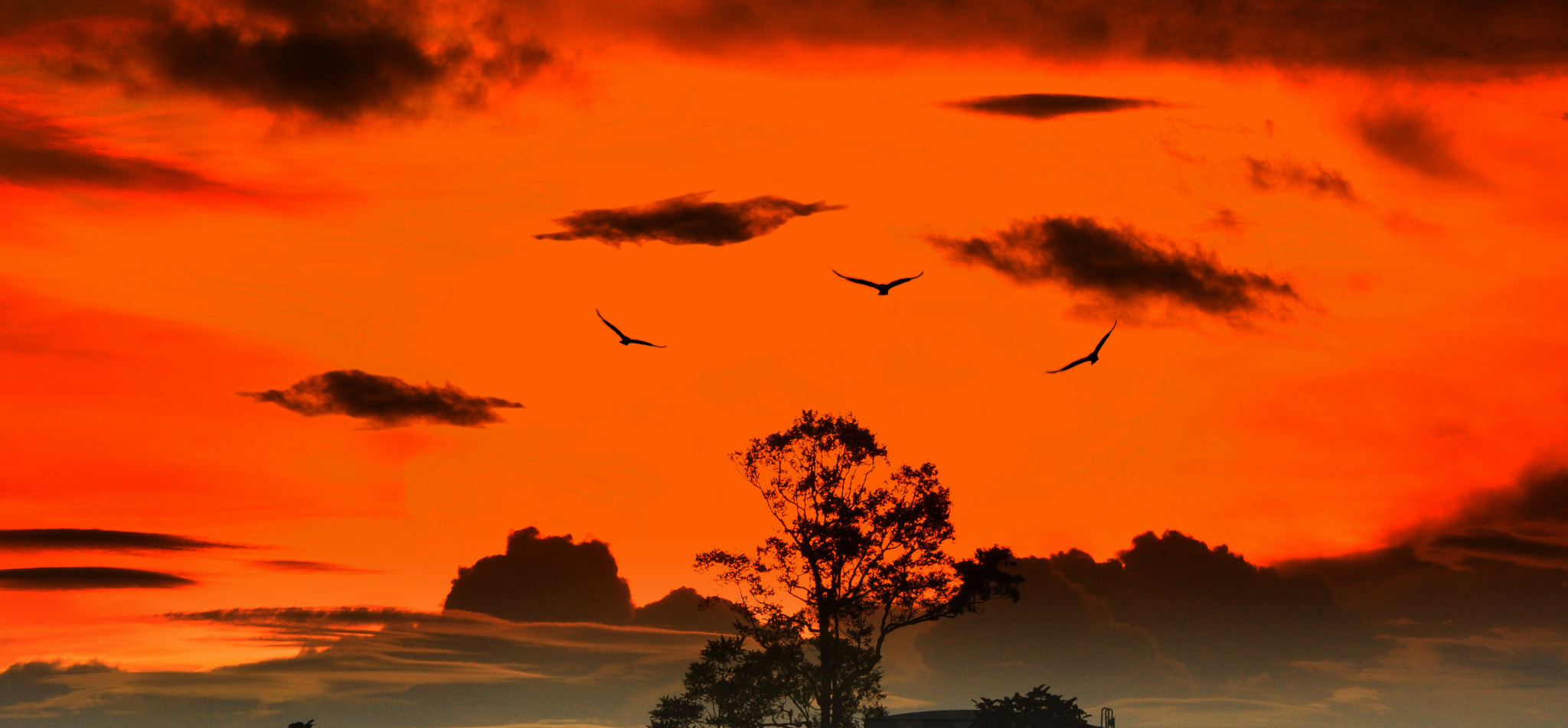 Photograph silhouette by nieya ain on 500px