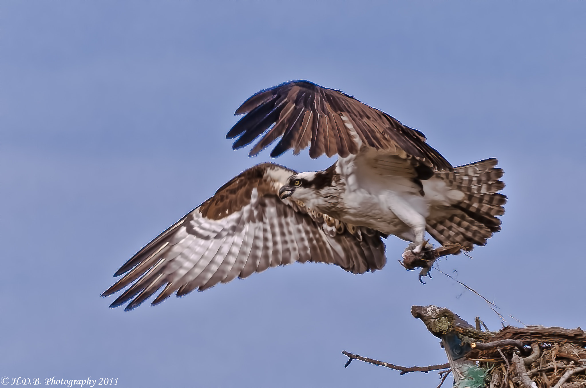 Photograph Take Off by Harold Begun on 500px