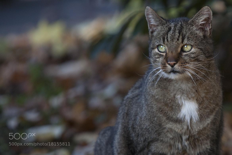 Photograph Liesi by Bogna Mazunov on 500px