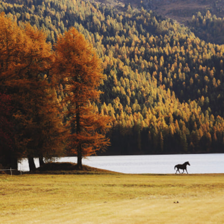 horse by lake  swiss autumn