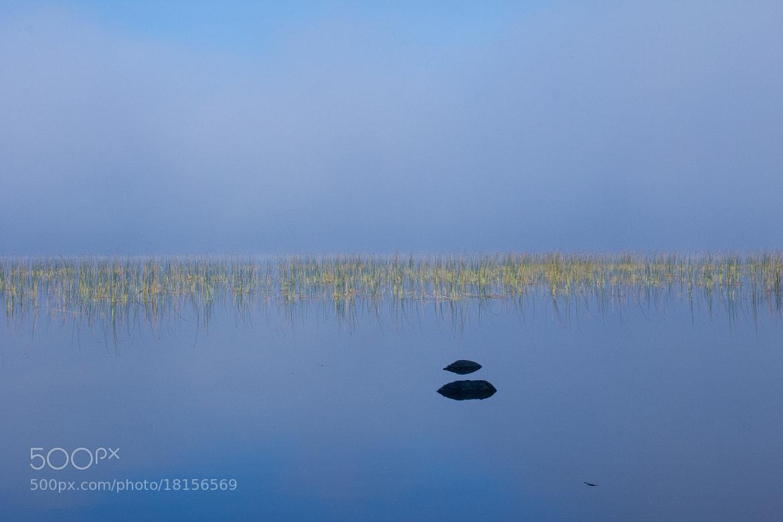 Photograph Grass & fog by Anuj  Raj on 500px