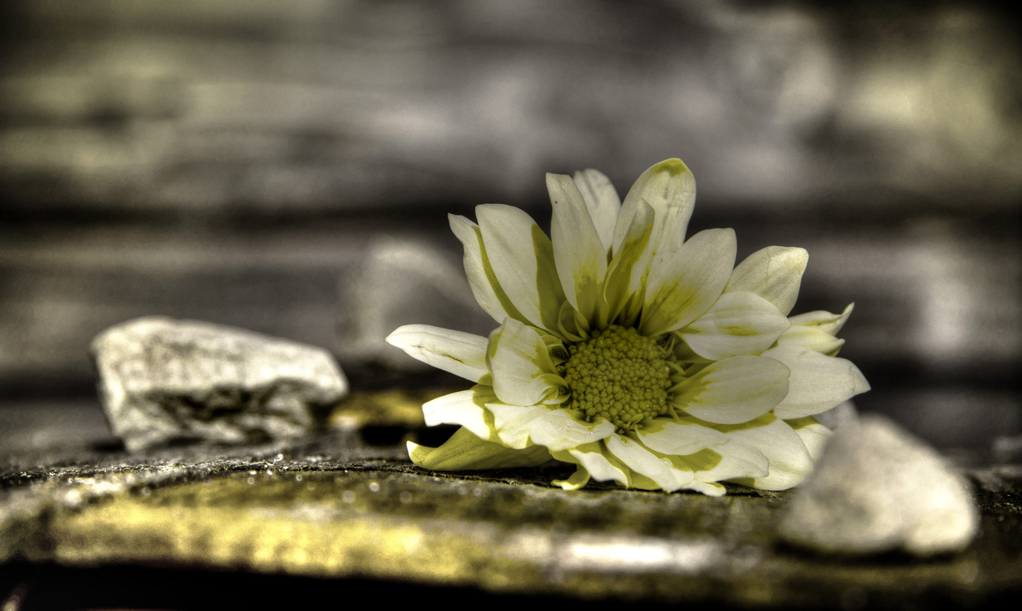 Photograph Hint Of Yellow by Stephen R on 500px
