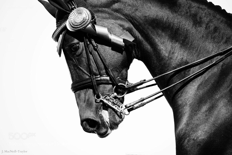 Photograph ribbon by Jennifer MacNeill Traylor on 500px