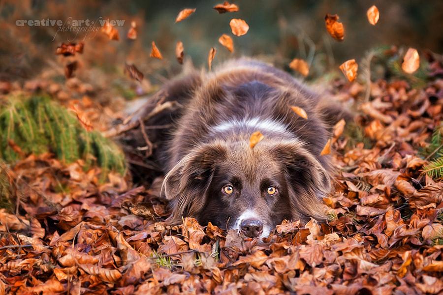 falling leafs, автор — Dalia Fichmann на 500px.com