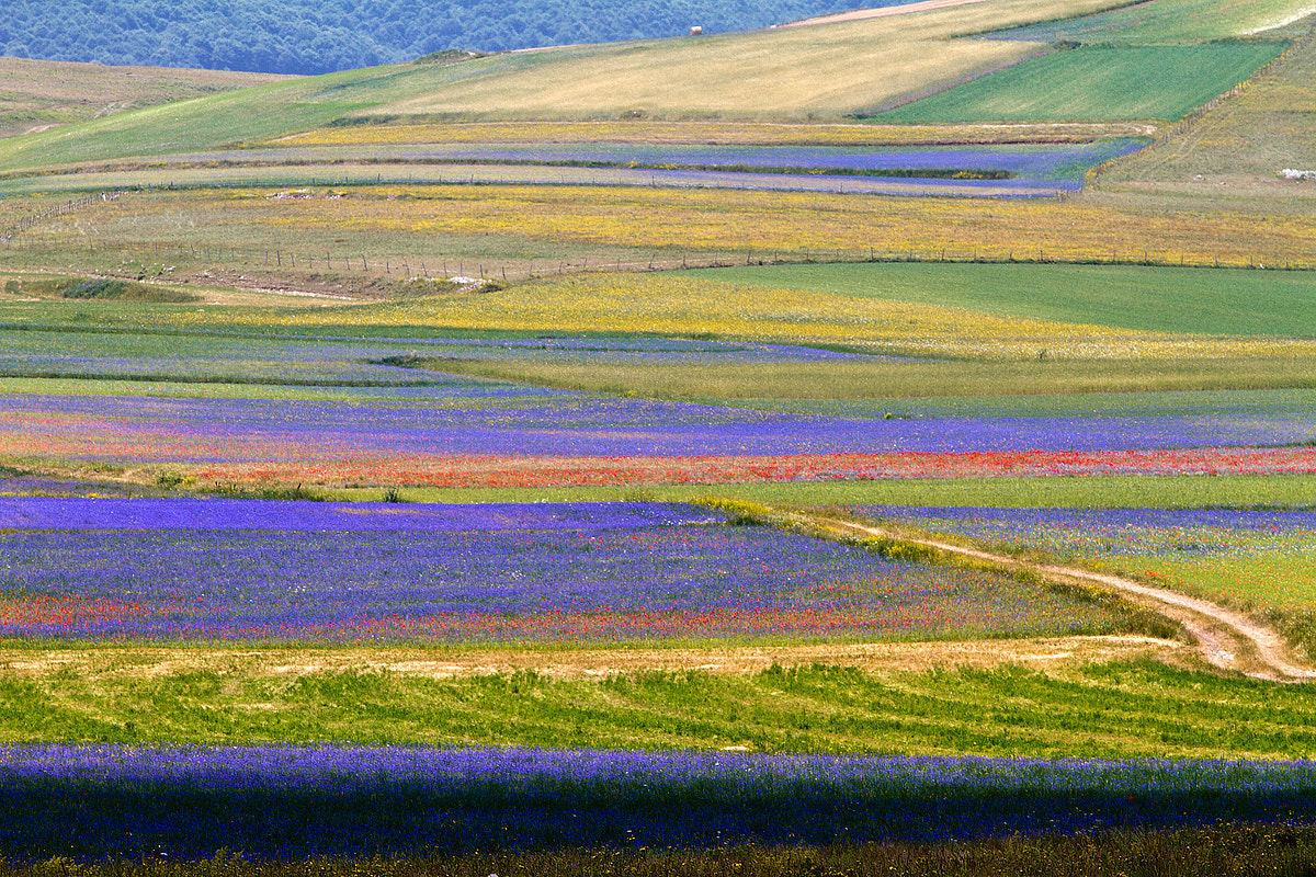 Photograph The Flowering by Valter Palone on 500px