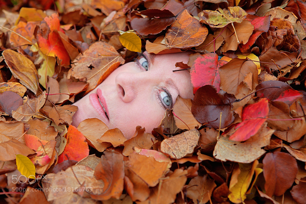"Photograph ""Covered in Fall"" by Andy Graham on 500px"