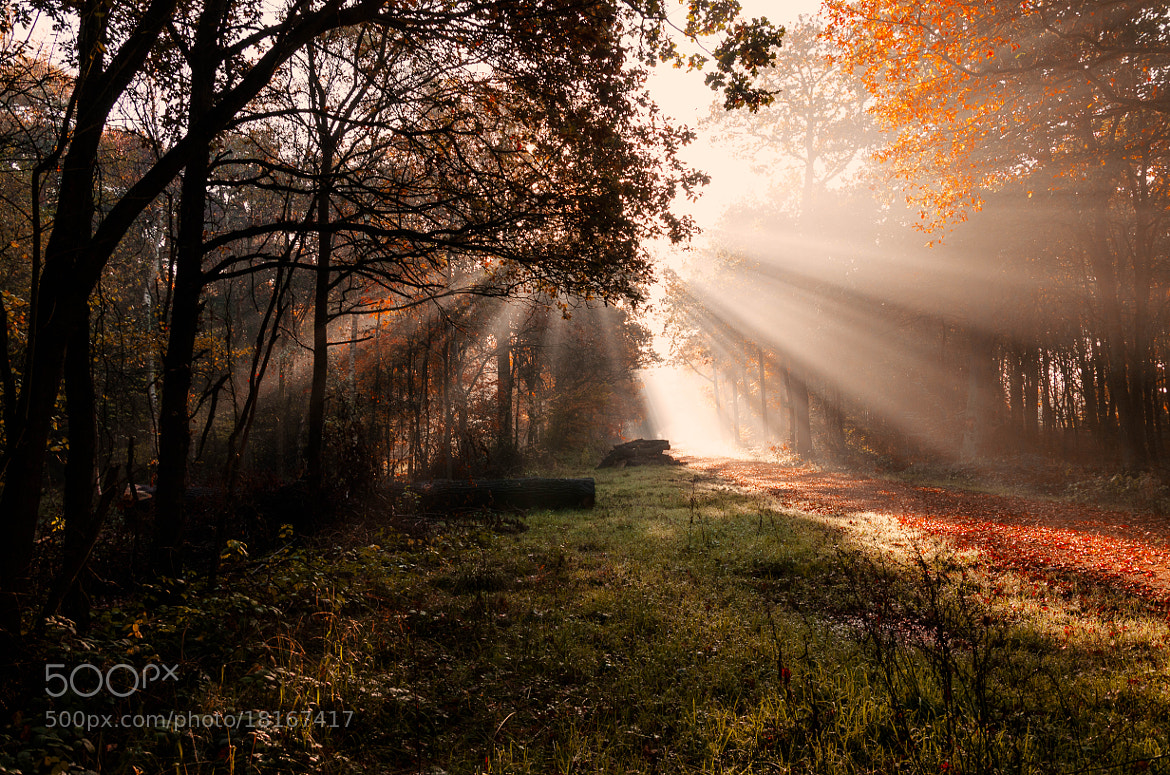Photograph Forest in Rays by Pawel Niktos on 500px