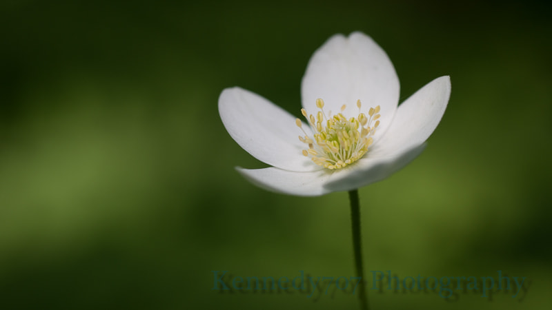 Photograph Simplicity by Wendy Kennedy on 500px