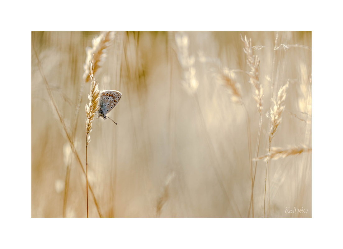 Photograph Blé en herbe by florence Kalheo on 500px