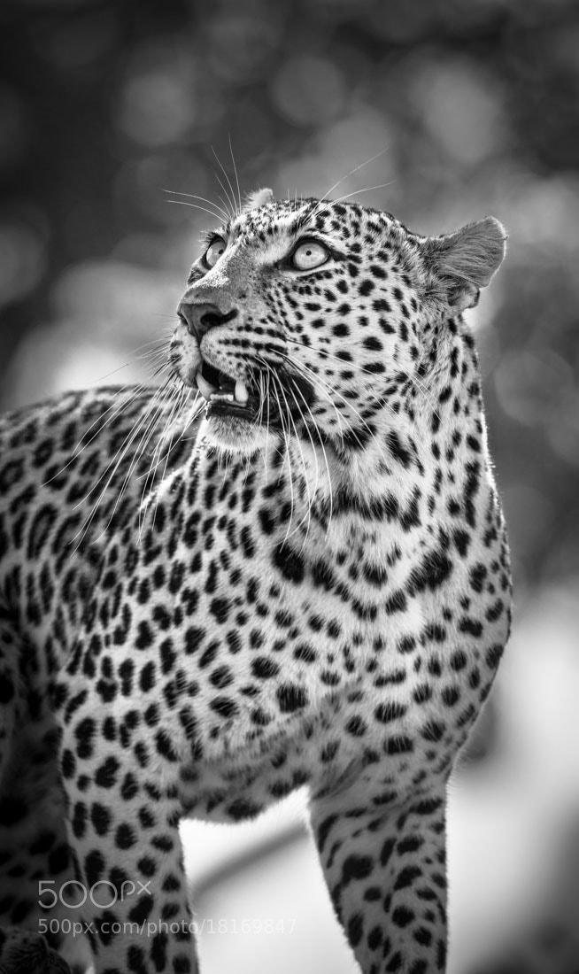 Photograph A Rare Beauty by Marlon du Toit on 500px