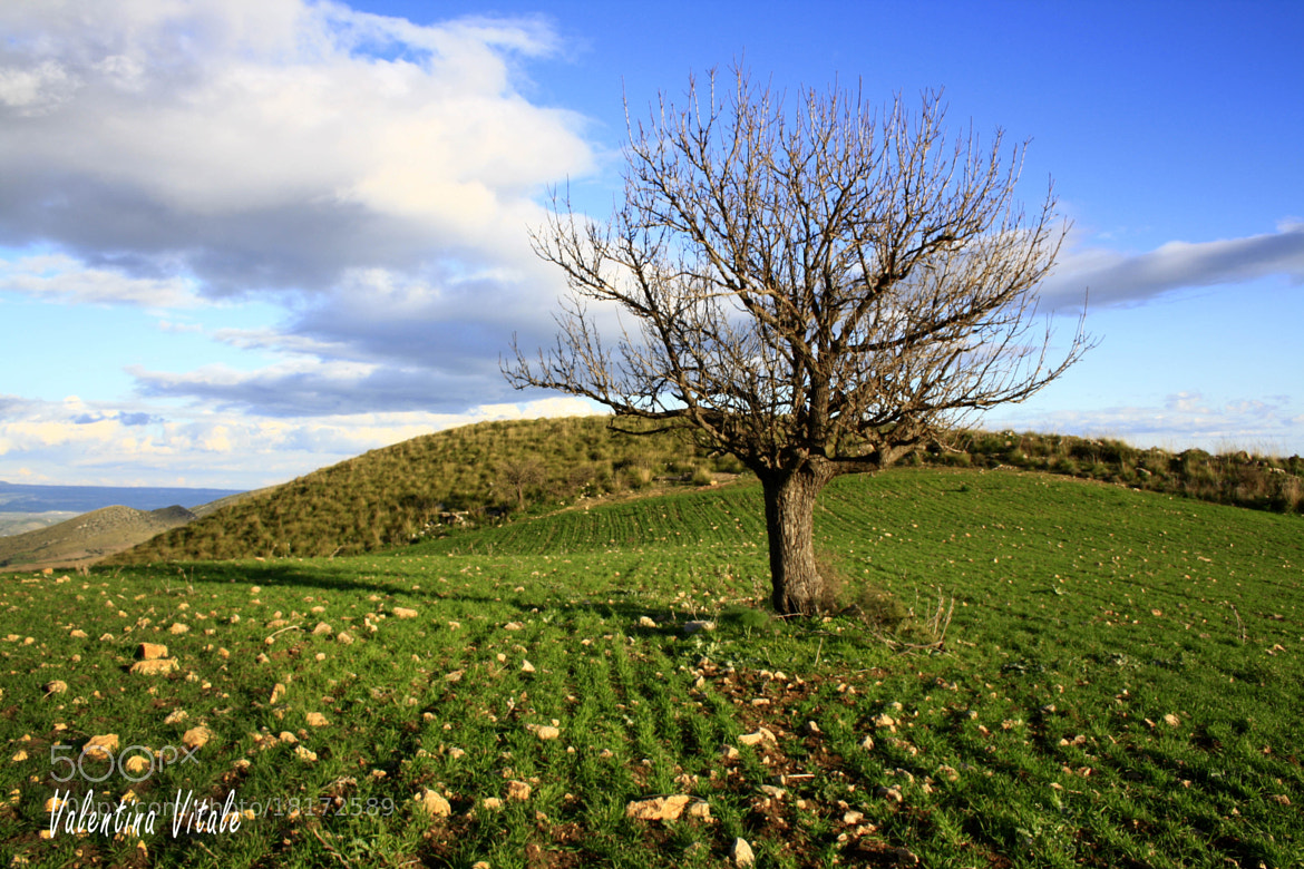 Photograph Lonely tree by Valentina Vitale on 500px