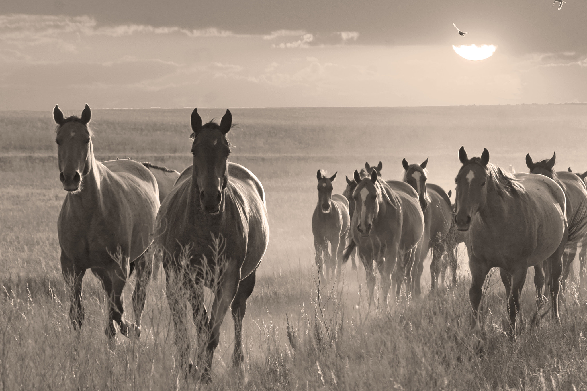 Photograph On the Prairie they Run by Judy Chandlee Panhandle Pics on 500px