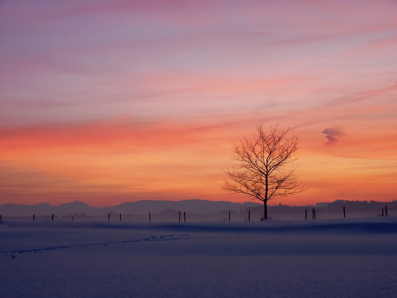 Photograph lonely tree II by Johannes Ha on 500px