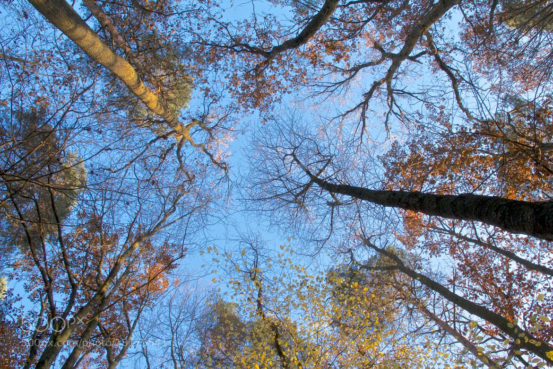 Photograph Fallende Blätter by Gerhard Merz on 500px