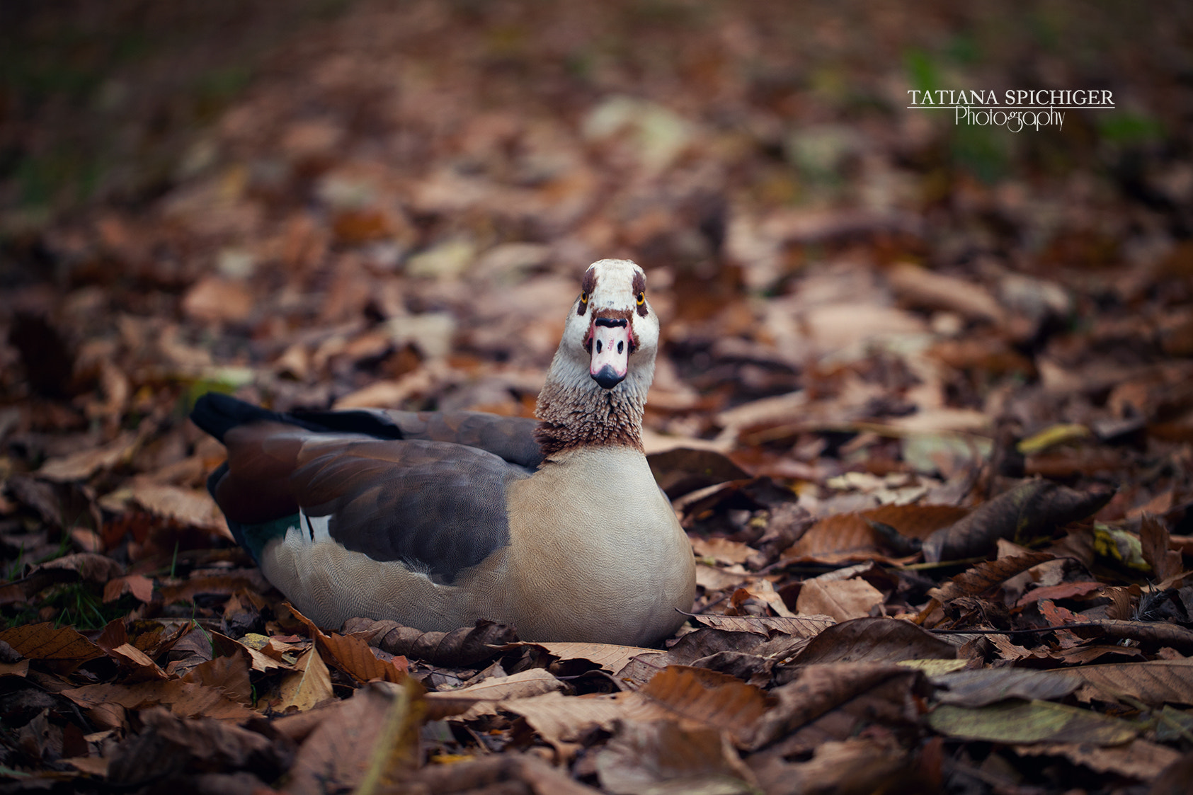 Photograph !quack !quack by Tatiana Spichiger on 500px