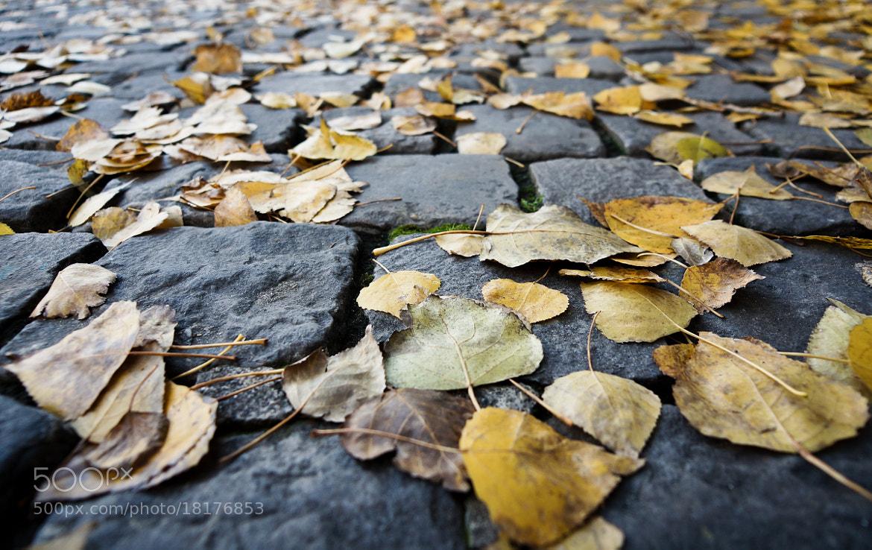 Photograph autumn in Paris by Eric Vermeil on 500px