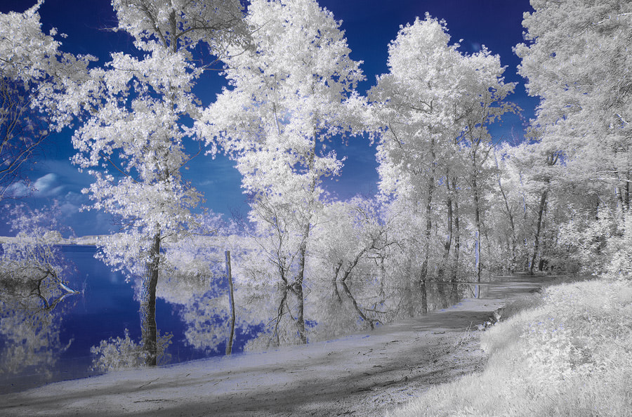 Photograph Infrared dreams by Roman Sayko on 500px