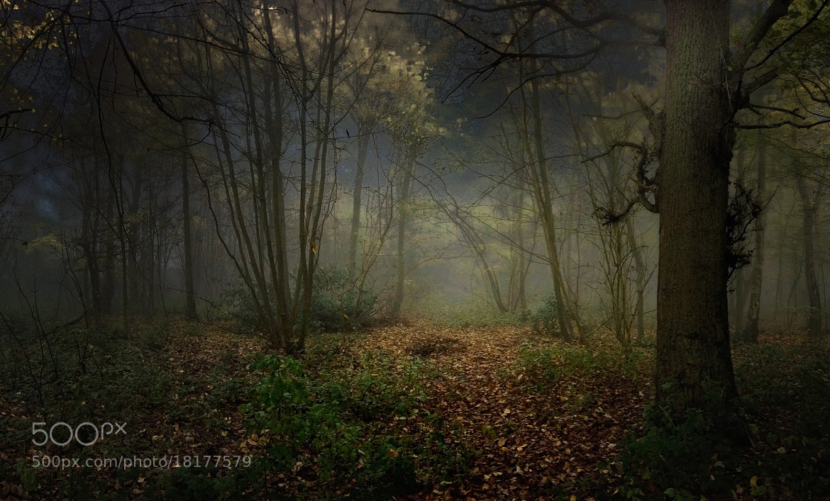 Photograph Misty woods by Phil Martin on 500px