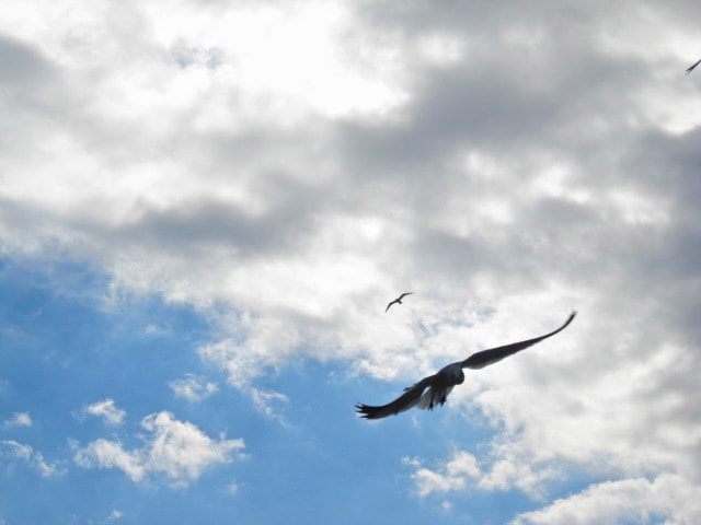 Photograph On wings of freedom by Faith P on 500px